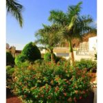 wlg_townhouse—corner-palm-mar-arona-3276d-vym-canarias-c2aff53184