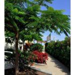 wlg_townhouse—corner-palm-mar-arona-3276d-vym-canarias-efe49b619e