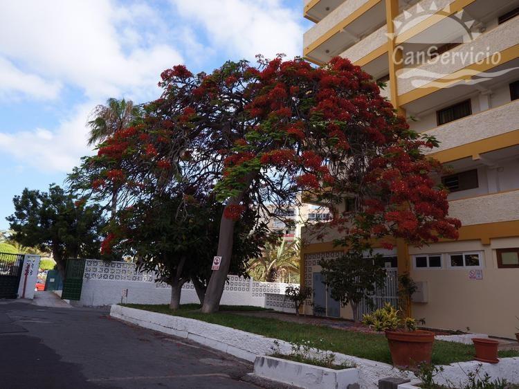 wlg_apartment-los-cristianos-arona-4984d-vym-canarias-ae4635283e